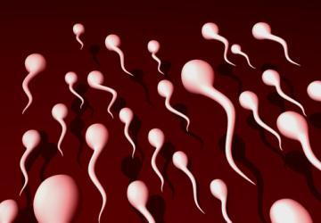 barzelletta sugli spermatozoi