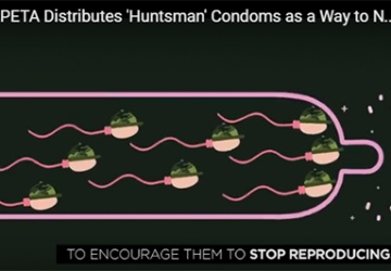 preservativi in omaggio ai cacciatori