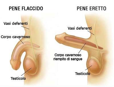 articoli erotici massaggio genitale