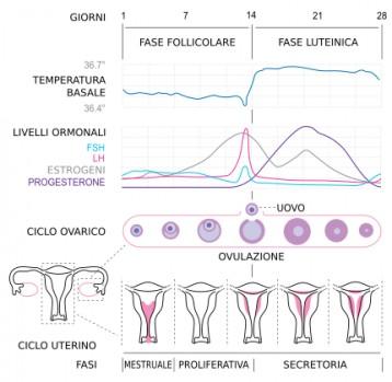 Pillola anticoncezionale: meccanismo d'azione
