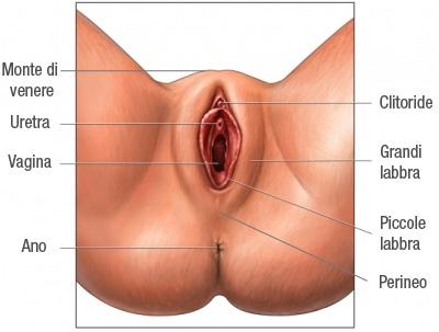 apparato genitale femminile esterno