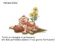 Krazy Kamasutra posizione primavera